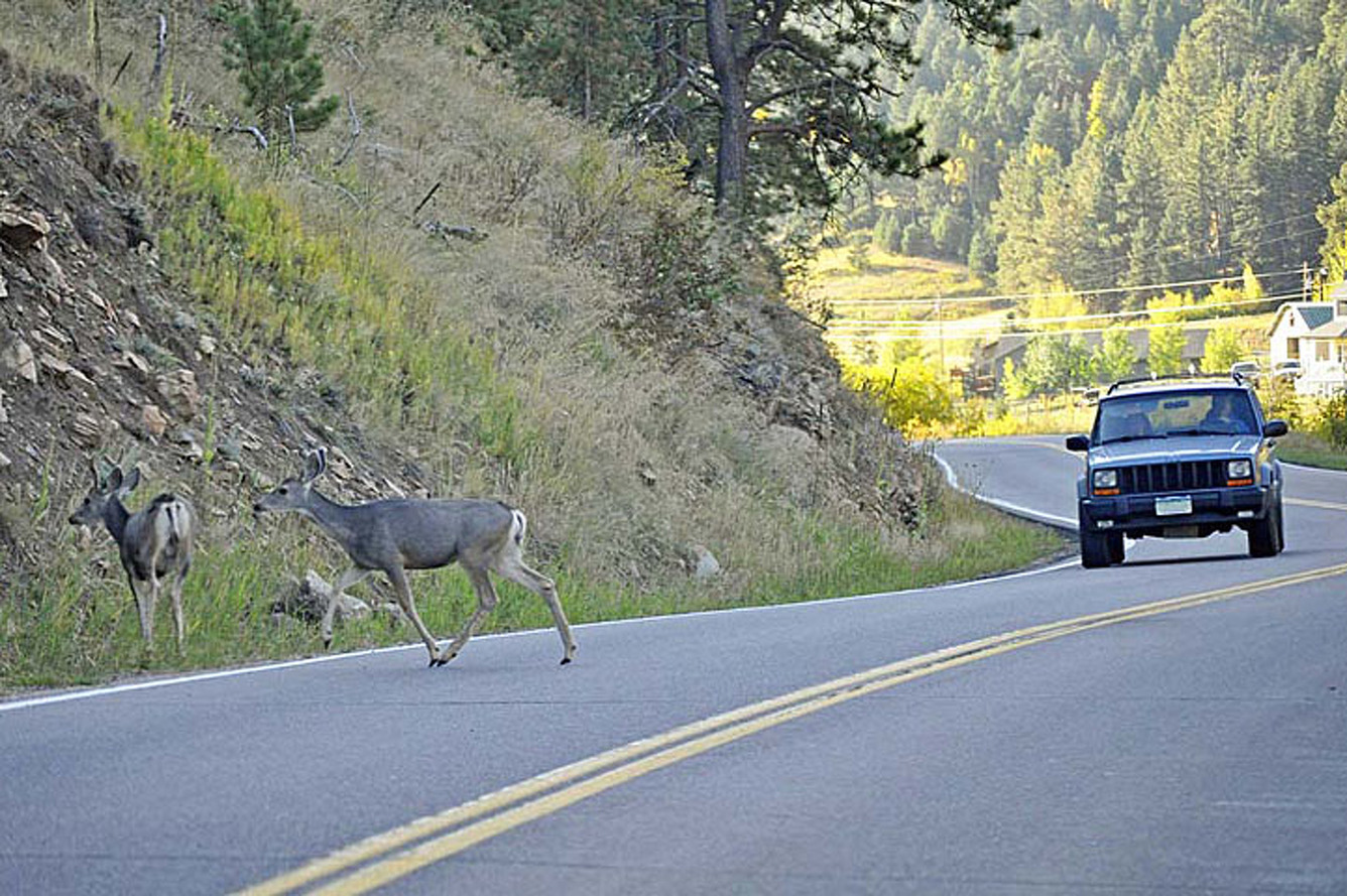 Top 10 States Where You're Likely To Hit a Deer