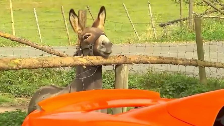 Donkey mistakes McLaren for giant carrot