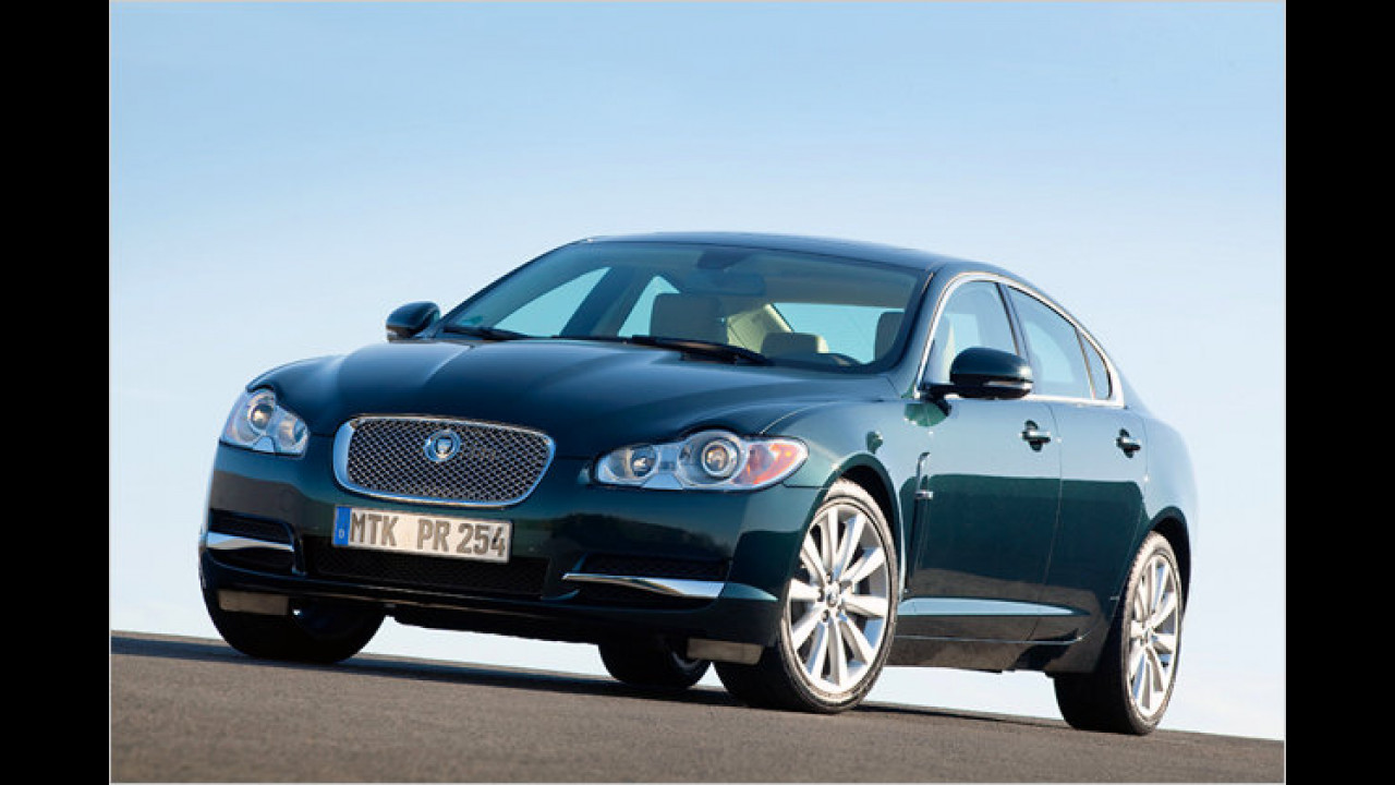 Jaguar: Die häufigste Farbe ist Schwarz