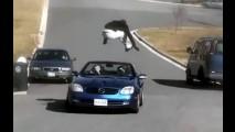 VÍDEO: Jovens imprudentes (ou loucos?) saltam sobre carros em movimento