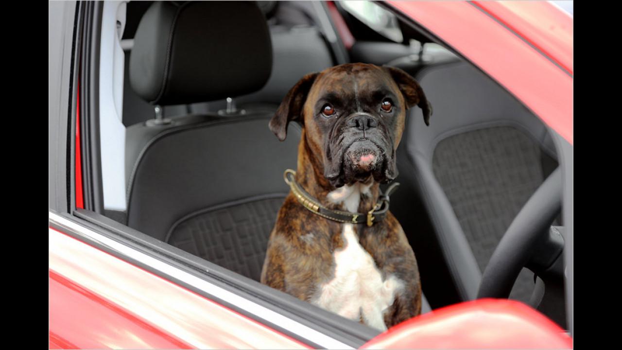 Hund parkt Auto