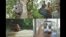 Jeep cria aplicativo que denuncia crimes contra a Mata Atlântica