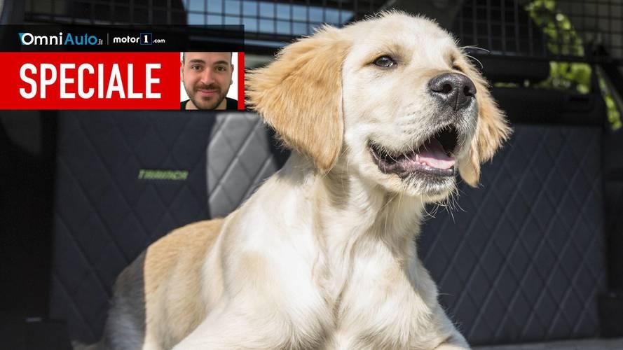 Le 9 cose da sapere per portare un cane in auto