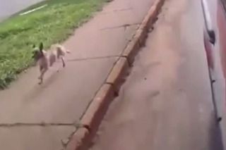 Loyal Dog Chases the Ambulance Carrying his Owner