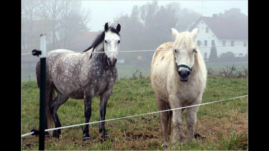 Vorsicht bei Pferden: Die Tiere mögen keinen Lärm