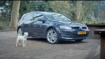VÍDEO: A paixão de um cachorro pelo novo Golf
