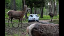 Volvo, test per evitare incidenti con animali