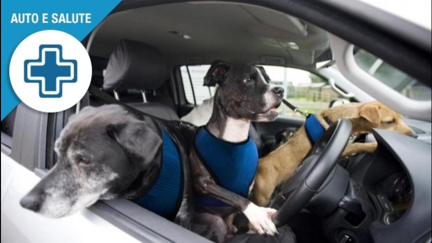 Animali in auto, le 3 regole d'oro per farli viaggiare bene