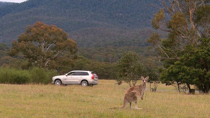 Volvo's Autonomous Tech Can't See Bouncing Kangaroos